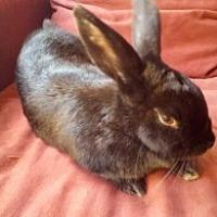 Adopt A Pet :: Thumper - St Johns, FL