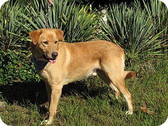 Labrador Retriever Mix Dog for adoption in Oakland, Arkansas - Bentley