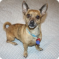 Adopt A Pet :: Charlie - I'm an easy dog! - Bellflower, CA