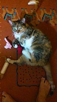 Domestic Mediumhair Cat for adoption in Orange, California - Ophelia