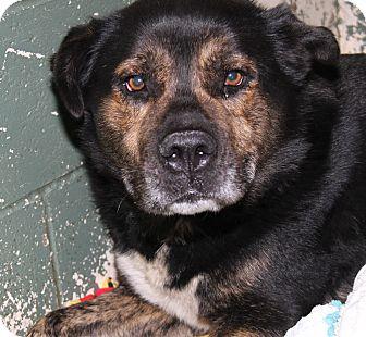 Shepherd (Unknown Type) Mix Dog for adoption in Marietta, Ohio - Teddy