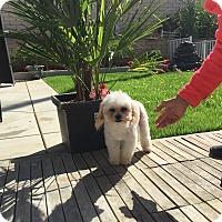 Adopt A Pet :: Ace - Santa Ana, CA