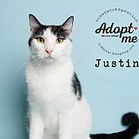 Adopt A Pet :: Justin - Pearland, TX