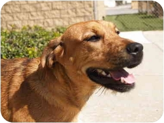 Terrier (Unknown Type, Medium) Mix Puppy for adoption in El Cajon, California - Tessie