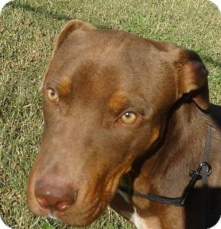 Doberman Pinscher Mix Dog for adoption in Rome, Georgia - Rusty