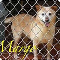 Adopt A Pet :: Margo - Arlington, TX
