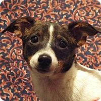 Adopt A Pet :: Winnie - Murphy, NC