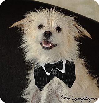 Terrier (Unknown Type, Small) Mix Dog for adoption in Henderson, Nevada - Eisenhower
