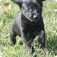 Adopt A Pet :: Deutz - Destrehan, LA