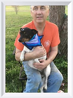 Jack Russell Terrier Mix Dog for adoption in Columbia, Tennessee - Buddy