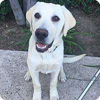 Adopt A Pet :: Wally - Mission Viejo, CA