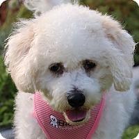 Adopt A Pet :: Liberty - La Costa, CA