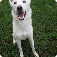 Adopt A Pet :: Farley - Fort Riley, KS