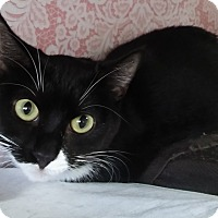 Adopt A Pet :: Fiona (sister of Felicia) - Witter, AR