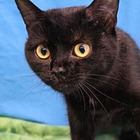 Adopt A Pet :: Brunhild - South Bend, IN