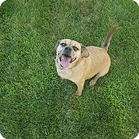 Adopt A Pet :: Ranger - Toledo, OH