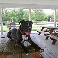 Adopt A Pet :: Rocket - Strongsville, OH