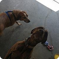 Adopt A Pet :: Stormy - Chippewa Falls, WI