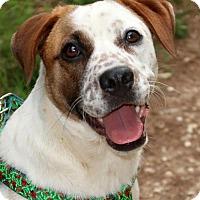 Adopt A Pet :: Delta - Little Compton, RI