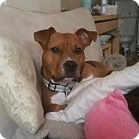 Adopt A Pet :: Ginger - Cherry Hill, NJ