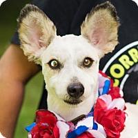 Adopt A Pet :: Isabella - Kingwood, TX