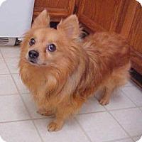 Adopt A Pet :: Scooby - 9 lbs - Dahlgren, VA