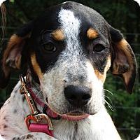 Adopt A Pet :: Leia - Allentown, PA