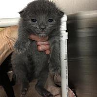 Adopt A Pet :: Rhapsody - Comanche, TX