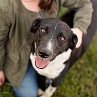 Adopt A Pet :: Yahoo - Southbury, CT