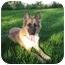 Photo 2 - German Shepherd Dog Mix Dog for adoption in Laguna Niguel, California - Lucky