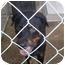 Photo 2 - Rottweiler Mix Dog for adoption in Henderson, North Carolina - Randy(aka Remi)