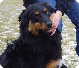 Collie Mix Dog for adoption in Elyria, Ohio - Deacon