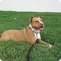 Adopt A Pet :: Annabelle - Houston, TX
