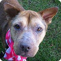 Adopt A Pet :: Pumpkin - Crescent City, CA