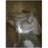 Adopt A Pet :: Tonto - Owasso, OK
