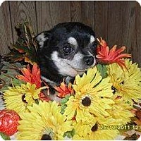 Adopt A Pet :: El Chubador - Chandlersville, OH