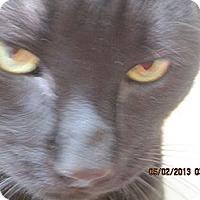 Adopt A Pet :: Buddy - Naples, FL