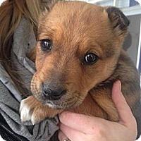 Adopt A Pet :: Lilo - Saskatoon, SK