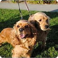 Adopt A Pet :: Shelly - Los Angeles, CA