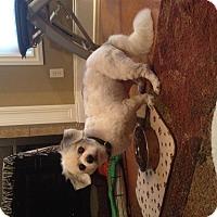 Adopt A Pet :: Baxter - Hagerstown, MD