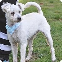Adopt A Pet :: Benny - Tumwater, WA