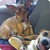 Adopt A Pet :: Delia and Rosalee - West Warwick, RI