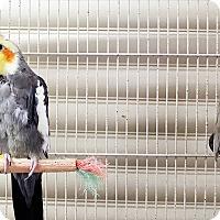 Adopt A Pet :: Bosco and Teeter - Grandview, MO