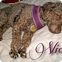 Adopt A Pet :: Vicky - Essex Junction, VT