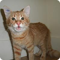Adopt A Pet :: May - Milwaukee, WI
