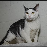 Adopt A Pet :: Gee Gee - Brick, NJ