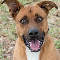 Adopt A Pet :: Luke - Loxahatchee, FL