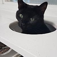 Adopt A Pet :: Roo - Stevensville, MD