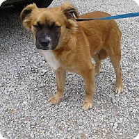 Adopt A Pet :: Seth - Mooresville, IN