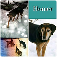 Adopt A Pet :: Homer ADOPTED - Ontario, ON